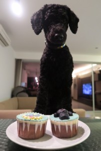 Cupcakes for the poodle