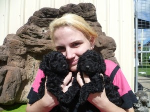 girl holding 2 poodle pup