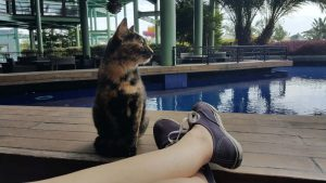 cat in a resort