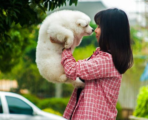calming a pet for boarding