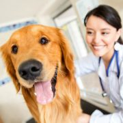 Dog boarding professional doing health check.