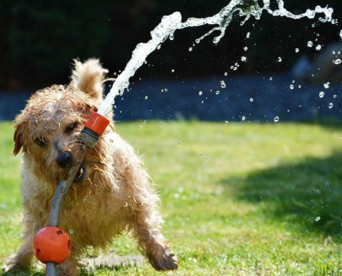 dog playing hose in a spacious kennel