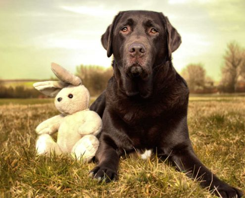 dog and a teddy for boarding