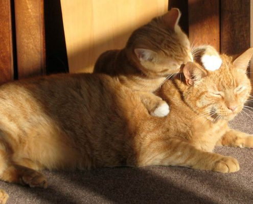 one cat grooming another