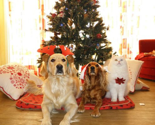Holiday feel cat & dogs