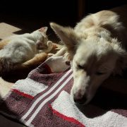 dog and cat together in pet boarding