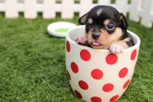 puppy playing in a mug