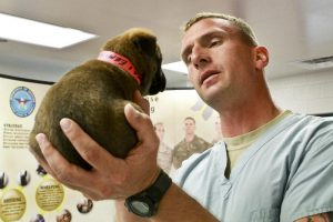 puppy and a vet inside a boarding facility